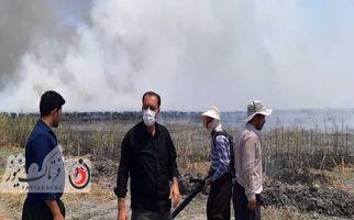 آتش سوزی در تالاب هشیلان+فیلم و عکس