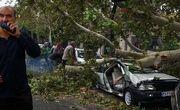 سقوط درختان بر روی خودروها در پی طوفان و باران اهواز