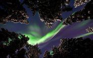 عکس منتخب نشنال جئوگرافیک | شفق شمالی در جنگل های سوئد