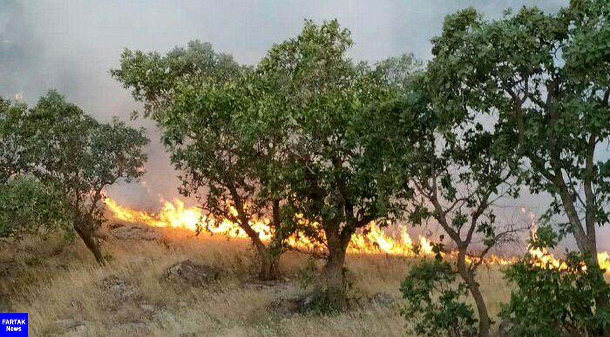 پایان آتش سوزی منطقه حفاظت شده بوزین و مرخیل با تقدیم یک شهید