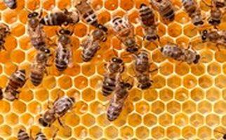 خوابیدن روی کندوهای زنبور برای درمان!