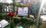 احیای چنارهای خیابان ولیعصر (عج) با کاشت 40 درخت آغاز شد