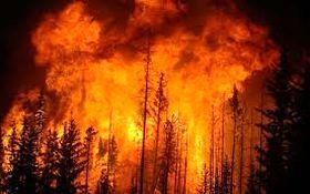 وقوع آتش سوزی گسترده در جنگلهای گلستان/ حضور بیش از 100 نیروی امدادی برای اطفای حریق + فیلم