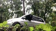 خروج دیدنی خرس از خودرو با شیوه دیدنی