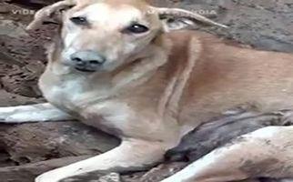 دلشوره یک سگ برای نجات تولههایش از زیر آوار