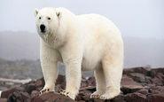 کشتن یک خرس قطبی در خانهای روستایی + فیلم