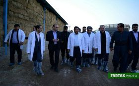اختصاصی/ بازدید رئیس ستاد اجرایی فرمان حضرت امام (ره) از گاوداری 1000رأسی کاوات+تصاویر
