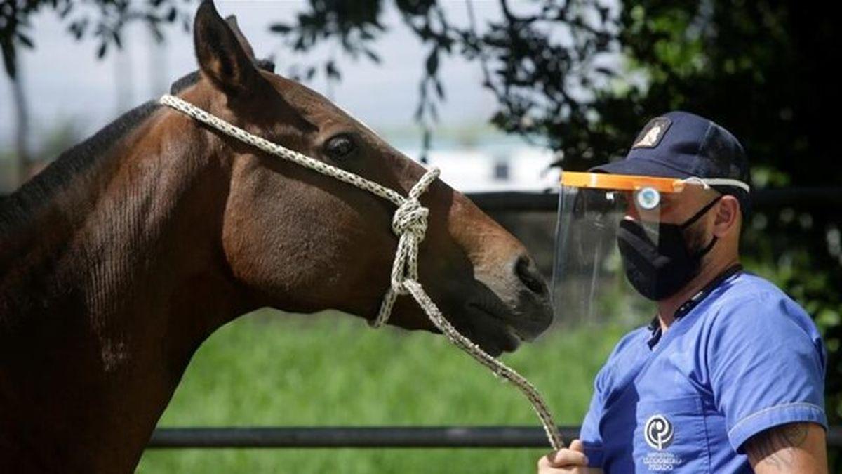 روی آوردن به اسب ها برای درمان کووید-۱۹