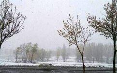برف بهاری در ۸ استان