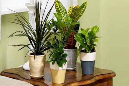 با این گیاهان آپارتمانی خواب راحتی داشته باشید