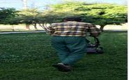 ساماندهی فضای سبز منطقه دو شهرداری کرمانشاه