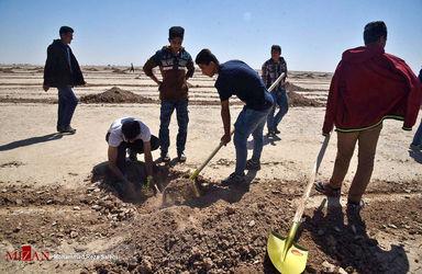 کاشت 4000 هزار هکتار نهال برای مبارزه با ریزگردها - خوزستان + تصاویر