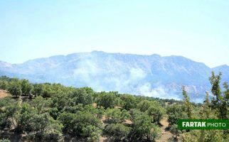 تصاویر آتش سوزی درخت های بلوط( جنگلهای ) دالاهو