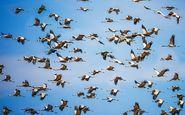 طرح برخورد با شکارچیان پرندگان وحشی در شرق مازندران اجرایی میشود