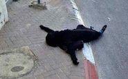 معمای مرگ زن 22 ساله در تهران / در خانه شوم چه گذشت؟!