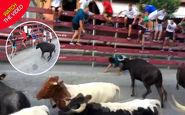 زنده ماندن باورنکردنی پسر جوان پس از حمله گاوها!