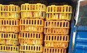 کشف بیش از 3 تن مرغ قاچاق در آستارا