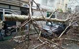 له شدن پراید در اثر سقوط درخت بزرگ