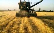 پیشبینی برداشت ۴۲۰ هزارتن گندم در لرستان