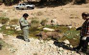 تلف شدن یک قلاده خرس قهوه ای در اسلام آبادغرب
