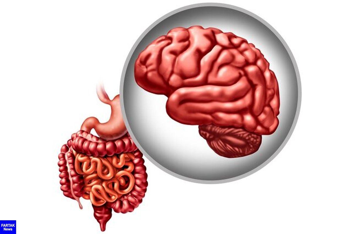 تاثیر یک باکتری روده در پیشگیری از پارکینسون