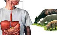 تب کریمه کنگو چگونه میتواند مرگآور شود