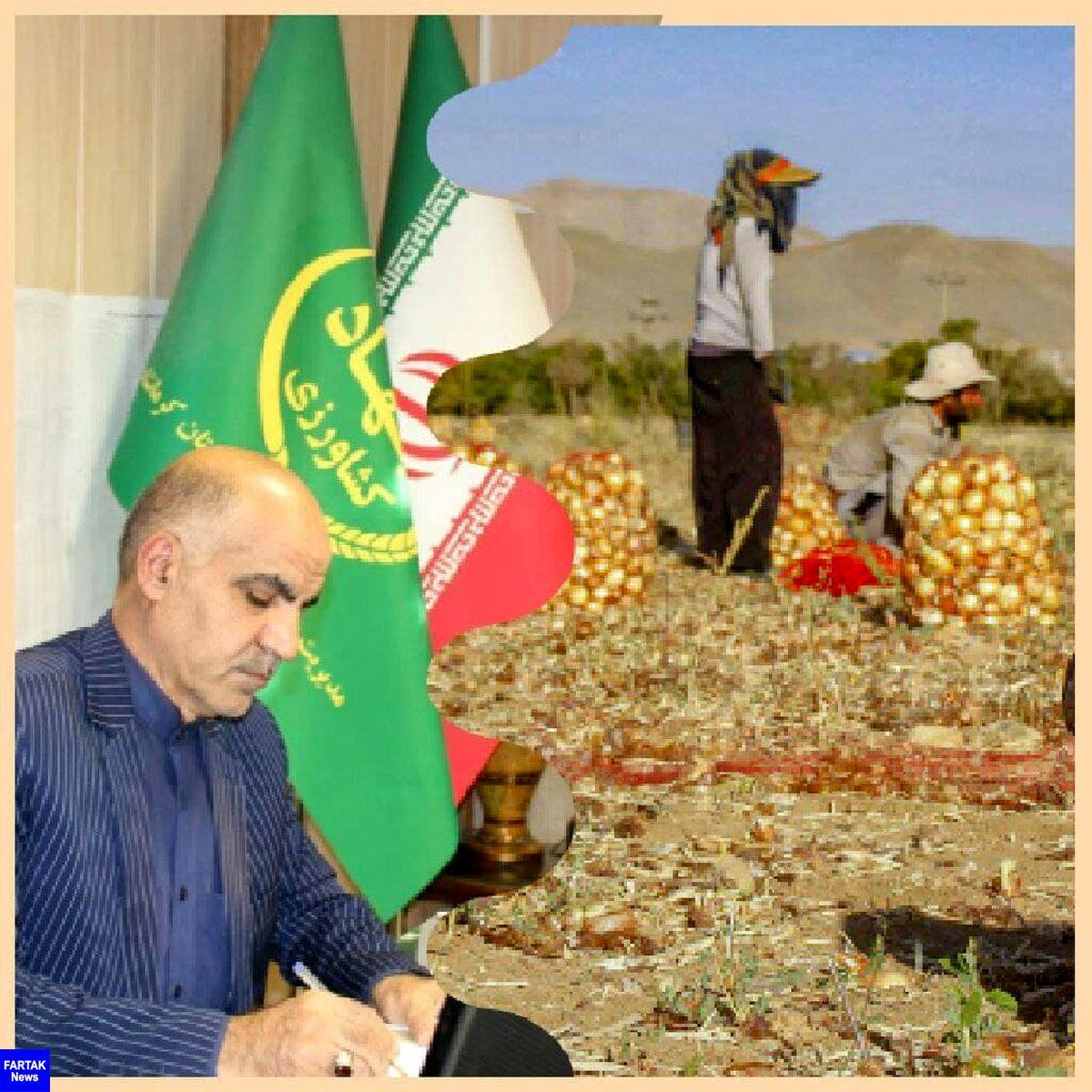  برداشت پیاز از مزارع شهرستان کرمانشاه آغاز شد