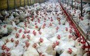 دستگیر اخلالگر 135 میلیردی بازار مرغ