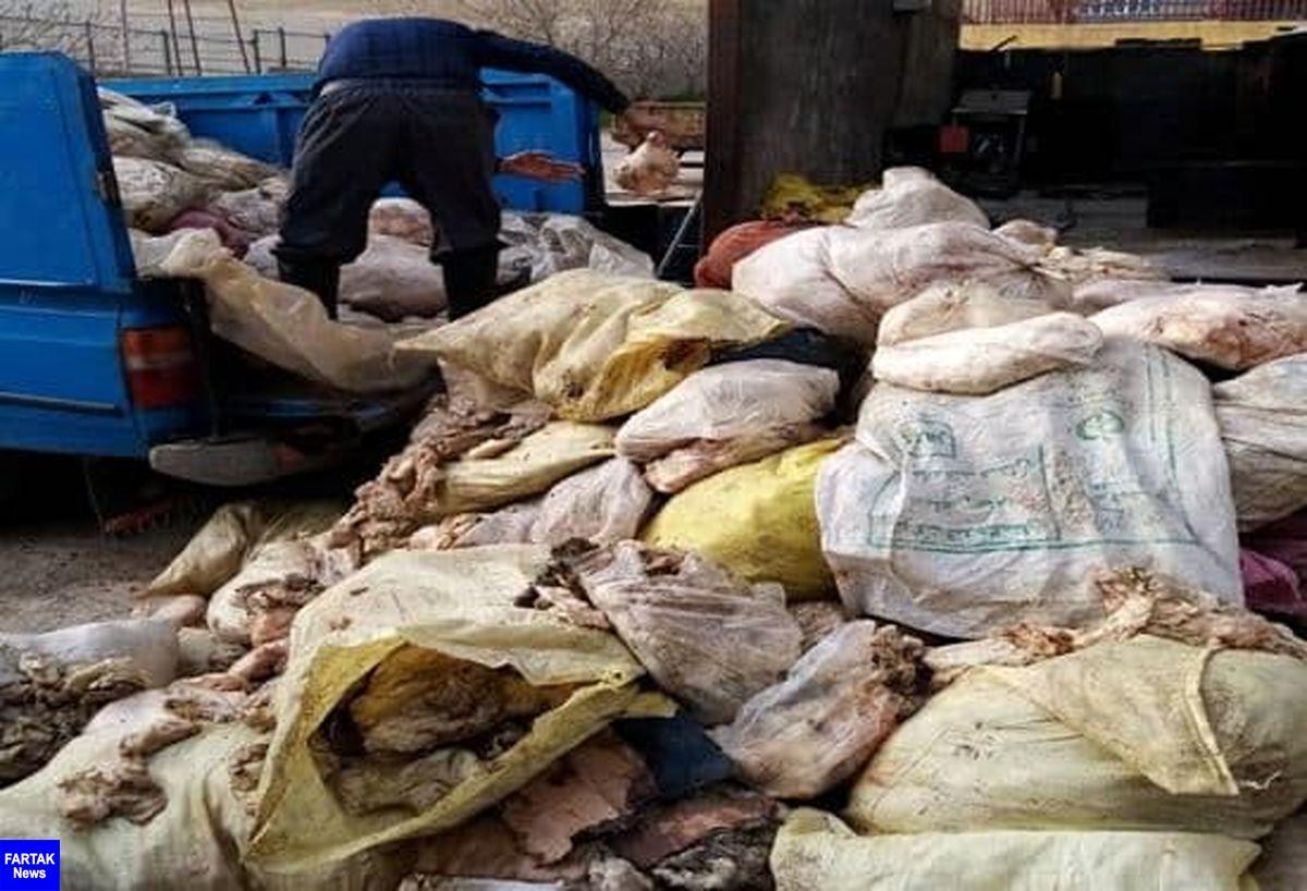 کشف و امحاء بیش از ۶ تن پوست مرغ در شهرستان کرمانشاه
