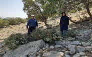 حذف بیماری لورانتوس از جنگلهای گیلانغرب