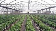 فرماندار کنگان: کارآفرینی در حوزه کشاورزی تقویت شود