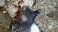 چهار اکیپ شکارچی و صیادغیرمجاز در گیلانغرب دستگیر شدند