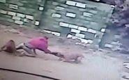 غافلگیر شدن دزد توسط سگهای نگهبان