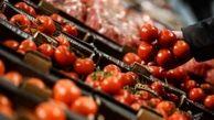 ۲۴۰ هزار تن گوجه فرنگی خرید تضمینی شد