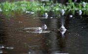 بارش شدید باران در پل دختر + فیلم