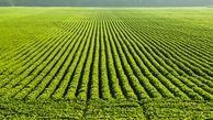 چین اراضی کشاورزی خود را برای تضمین امنیت غذایی توسعه میدهد