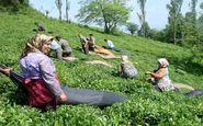 حرکت لاک پشتی بیمه اجتماعی روستاییان در مازندران