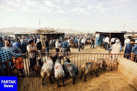 یک مقام مسئول در وزارت صنعت: قیمت عرضه دام زنده در عید سعید قربان ۴۷ هزار تومان است
