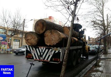 قلی زاده: کسی نمیتواند بدون مجوز دستگاههای ذیربط درختان ارسباران را قلع کند