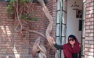 تیپ و ژست همسر شهاب حسینی در خانه موزه سیمین دانشور (عکس)
