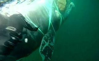 لحظه نجات نهنگ غولپیکر از میان طنابهای ماهیگیری + فیلم