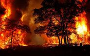 آتش در کمین جنگل ها و مراتع مهدیشهر و شاهرود