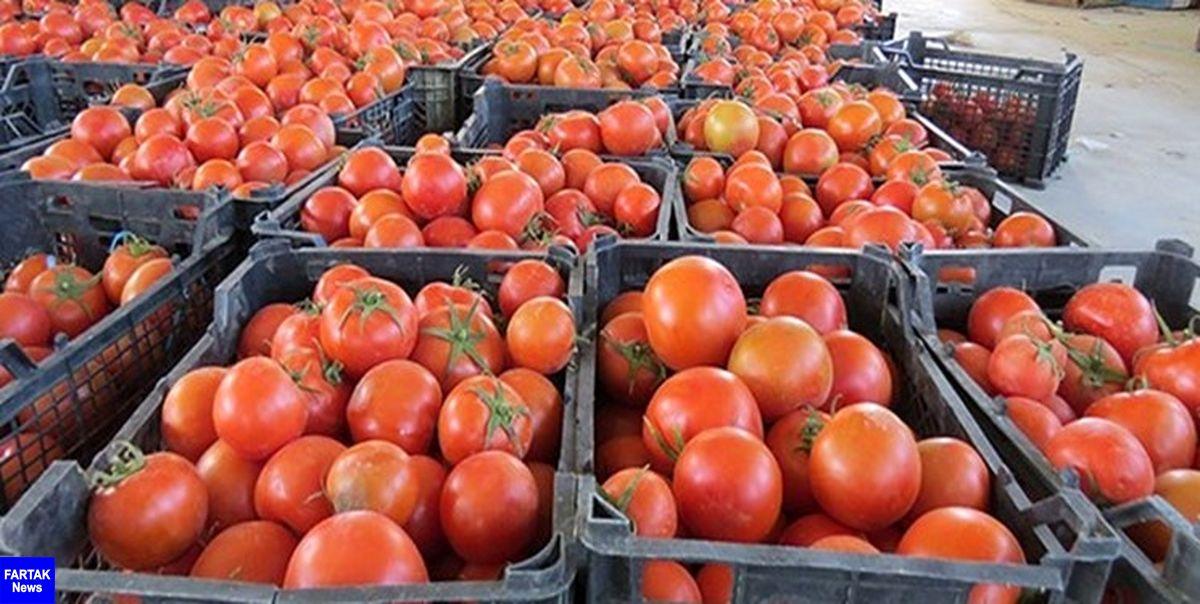 رگههای سفید گوجه فرنگی مفید است