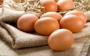 تخم مرغ گران تر خواهد شد؟