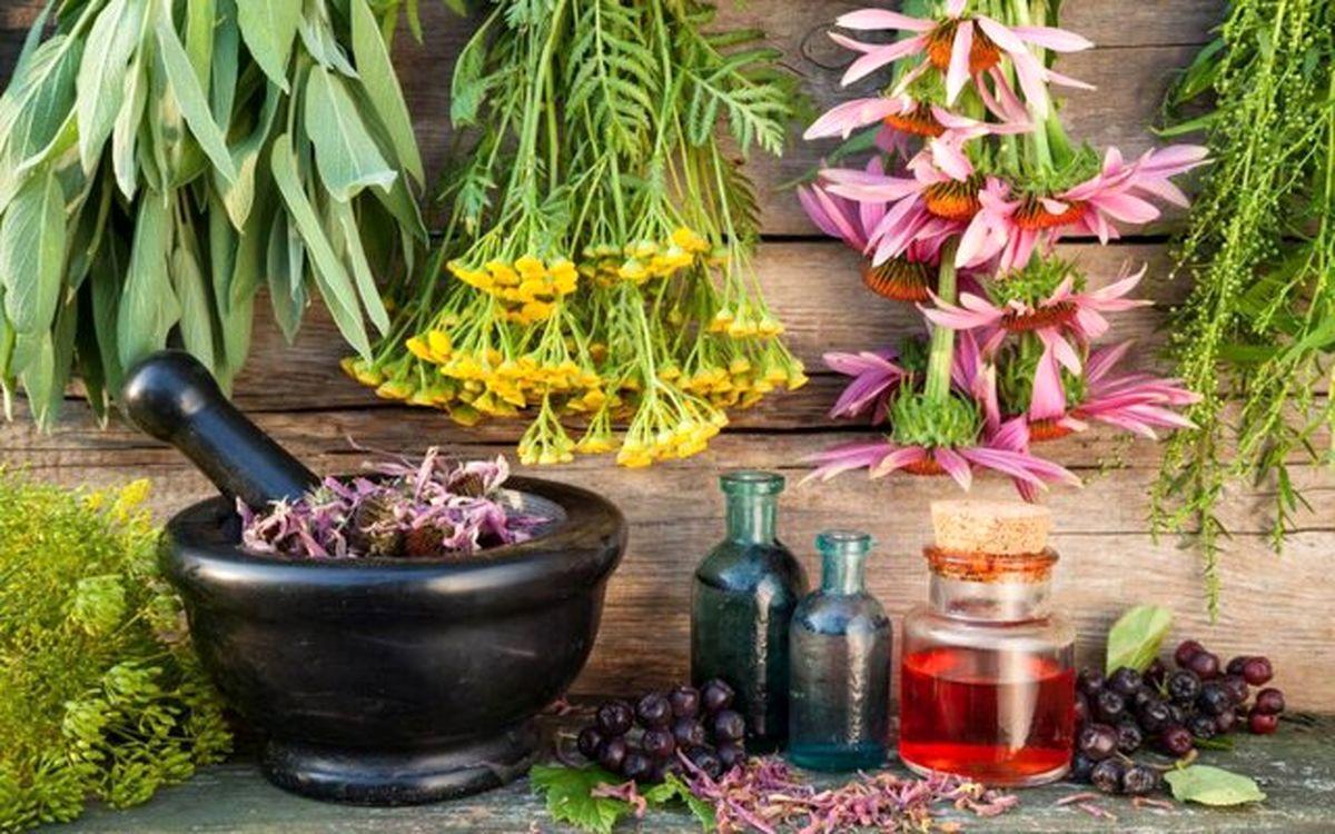 بررسی تاثیر گیاه برنجاسپ در درمان کرونا