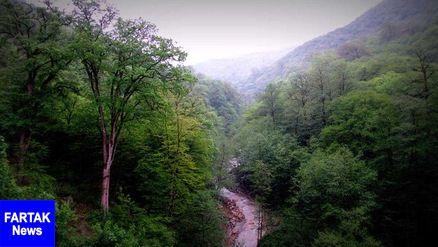 جنگلهای هیرکانی را چگونه محافظت کنیم؟