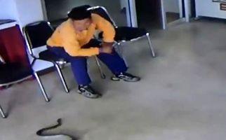 مردی که با حمله مار در ایستگاه پلیس غافلگیر شد +فیلم