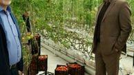   گلخانه کوثر کشاورزی استان را متحول می کند/ایجاد ۲۵۰ فرصت شغلی در اسلام آباد غرب