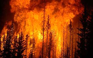 آتشی که به فرشته مرگ مردم کالیفرنیا تبدیل شده است+فیلم