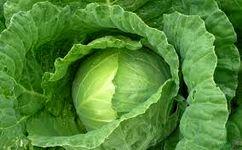 کاهش عوارض درمان سرطانه سینه با دو خوراکی مغذی